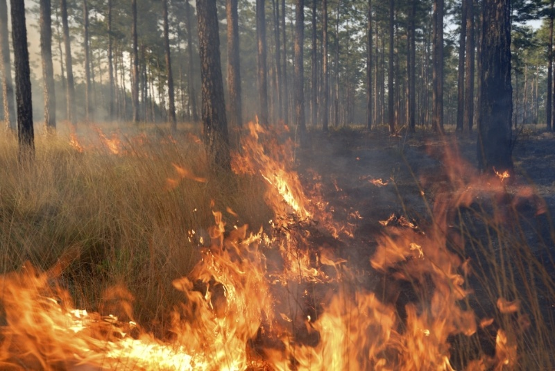 Wildfire-1